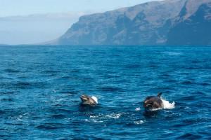 teneriffa-delfine-2