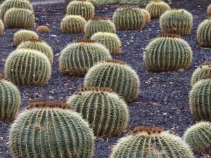 teneriffa-cactus-park
