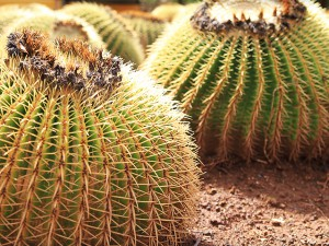 teneriffa-cactus-park2